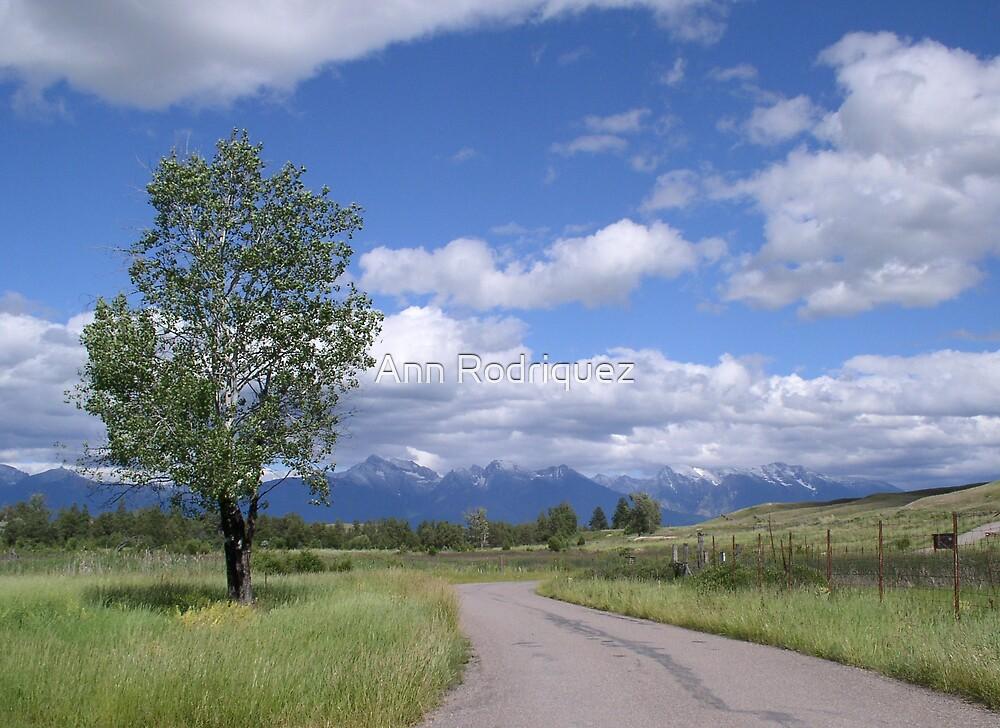 Sunday Drive by Ann Rodriquez