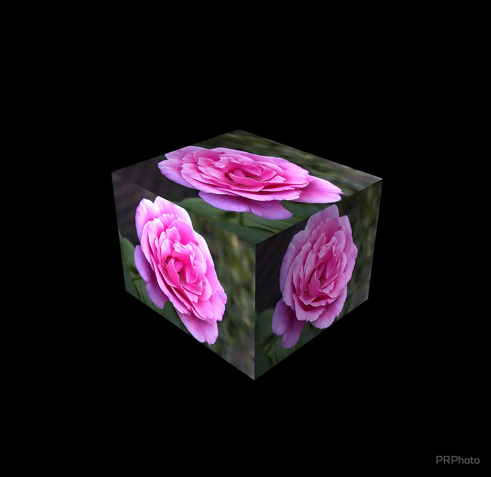 Roses in a box on black by PRPhoto