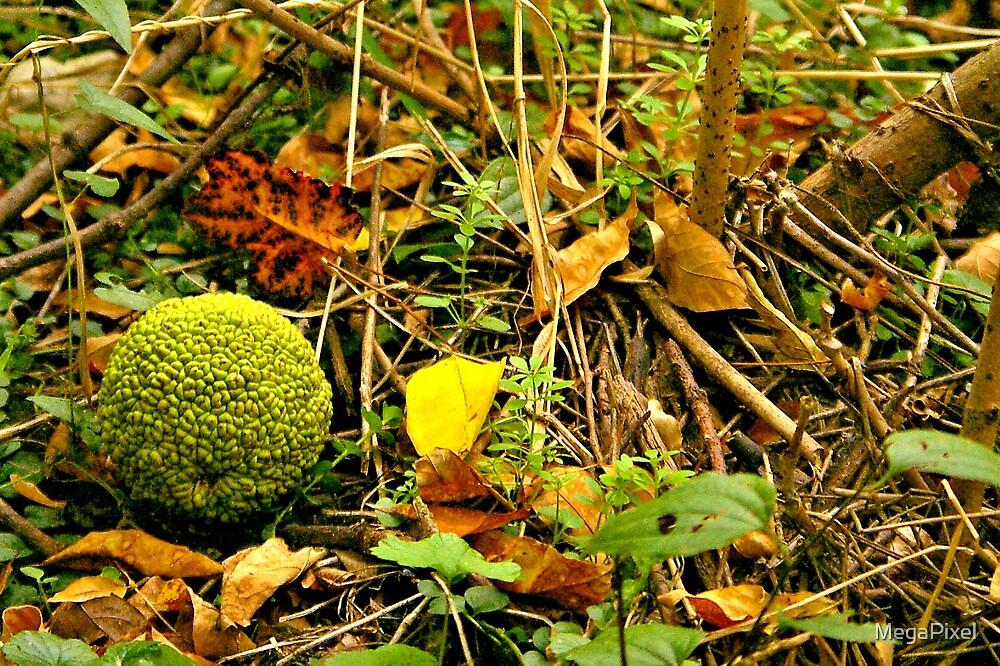 Hedge Apple on Forest Floor by MegaPixel