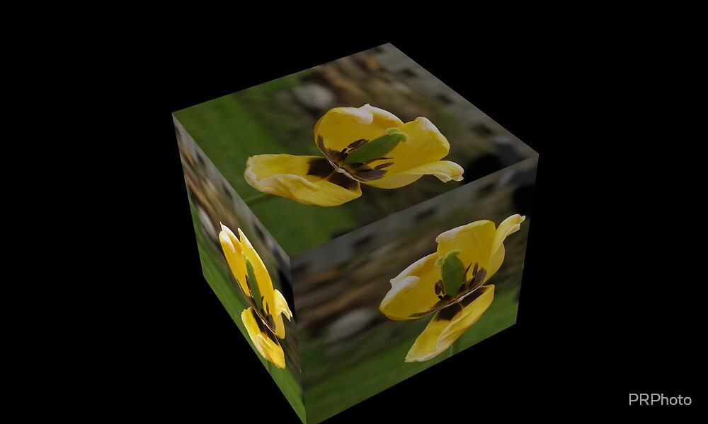 Beautiful yellow Flowers  by PRPhoto
