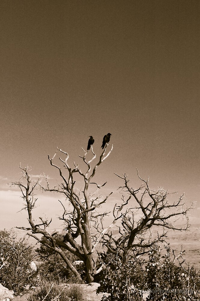 Ravens in Canyonlands National Park by SwainPhotography