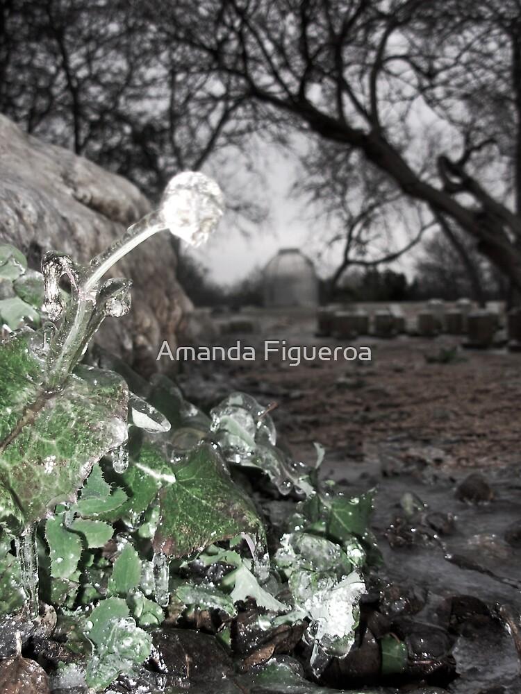 Ice by Amanda Figueroa