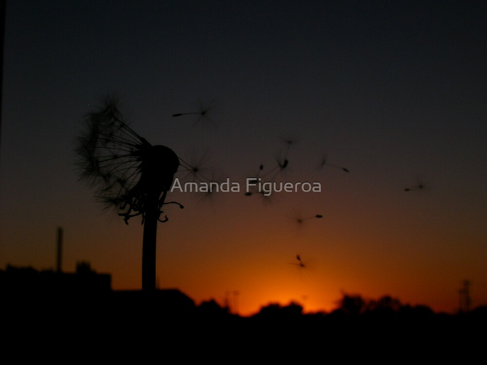Dandelion  by Amanda Figueroa