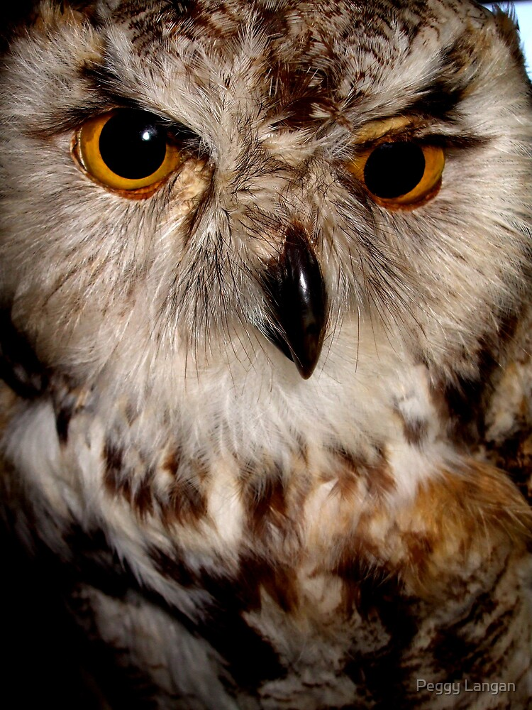 Owl Looking At You by Peggy Langan