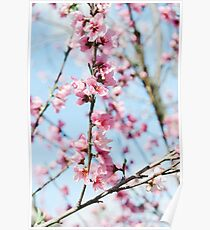 Peach Blossoms Poster