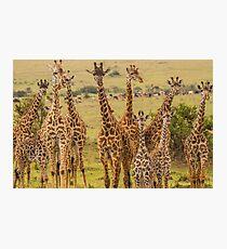Giraffic Jam Photographic Print