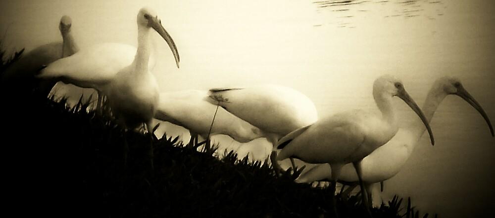 White flight by dreamer889