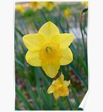 Spring Sings Poster