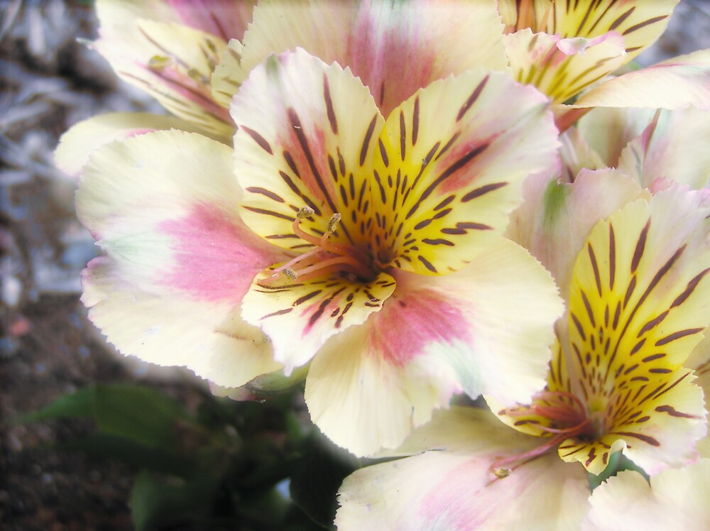 flowers 2 by bubblewrap