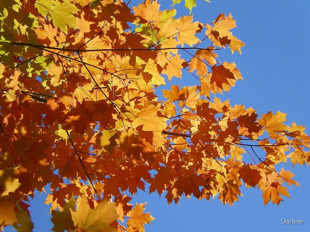 Autumn's Umbrella by Darline