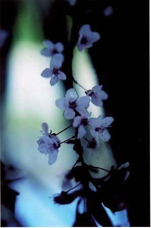 Elagant Floral by randrews