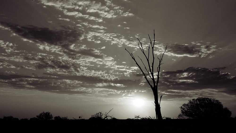 Lonely Tree by Craig Hender