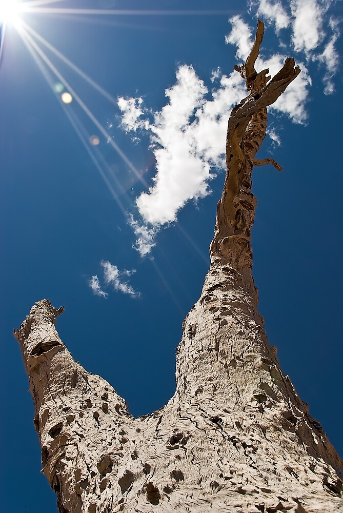 Dead Tree by Craig Hender