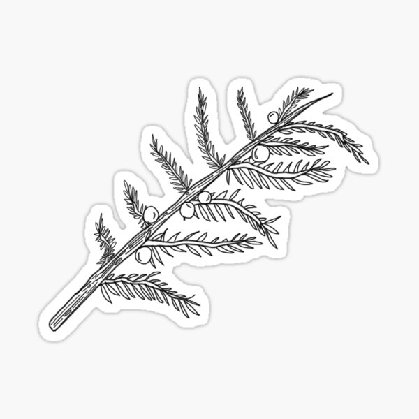 Juniper Sticker