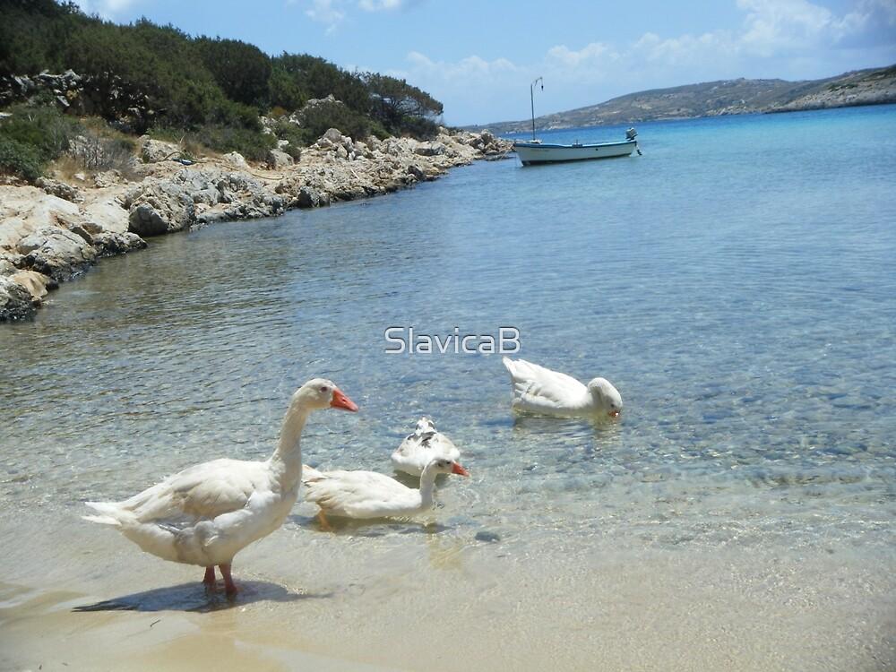 Greek Island Geese in Lipsi by SlavicaB