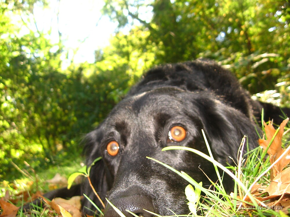 marty in the grass. that is what she is. by Janet McArthur
