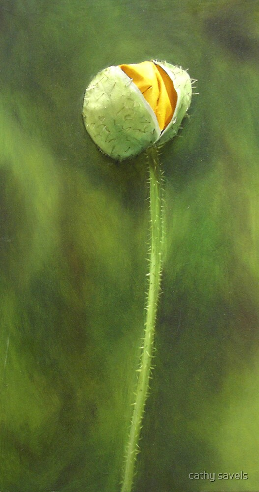 yellow poppy by cathy savels