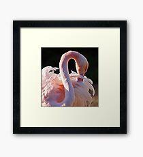 Pink Flamingo Framed Print