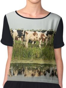 Cows and their reflective image Chiffon Top