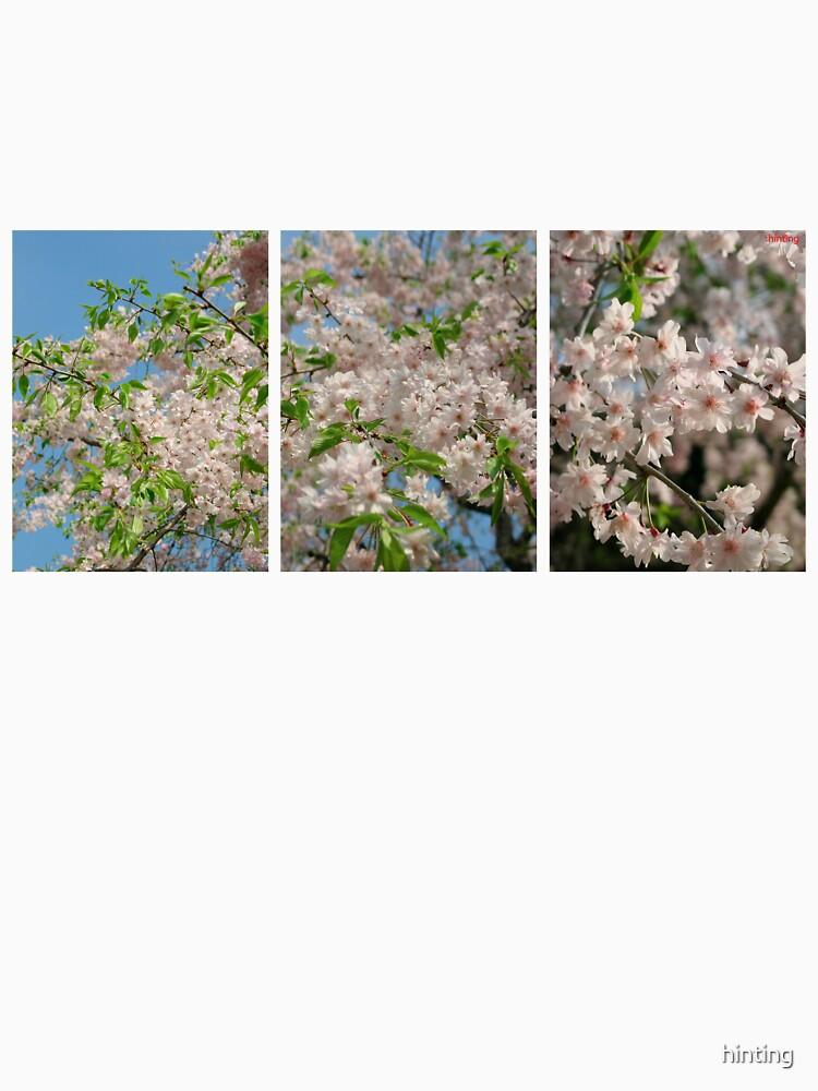 Scale2-Sakura TEE by hinting
