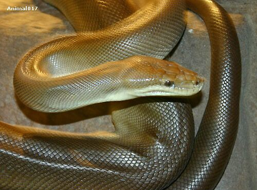 Snake Bite by GetCarter