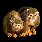 Two squirrel monkeys agains black background by Adriana Zoon