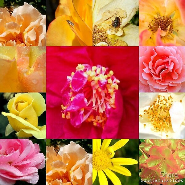 Flower Mosaic by Shara
