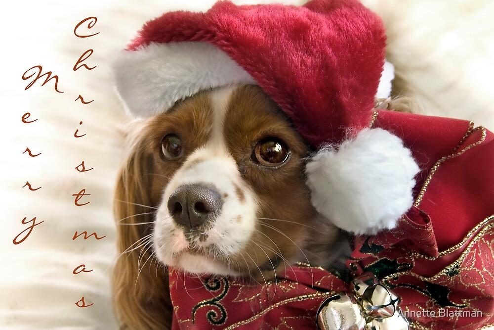 Cavalier Christmas by Annette Blattman