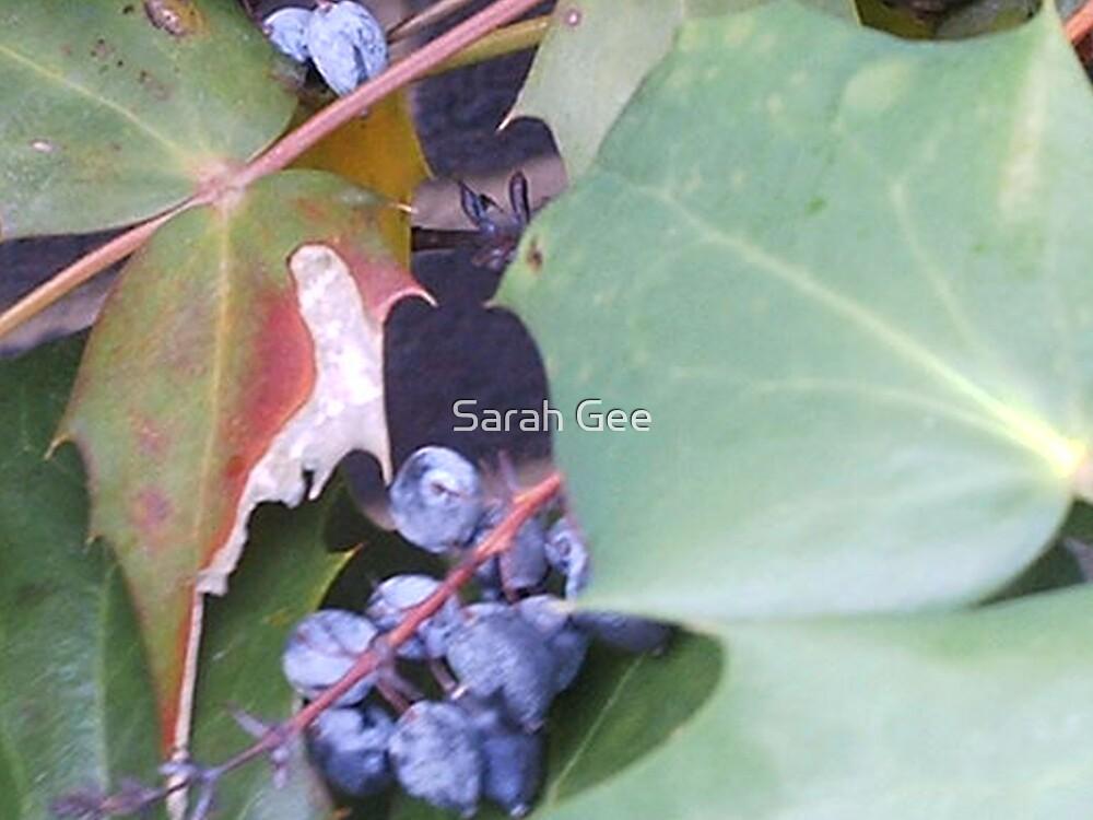 Berries.... by Sarah Gee