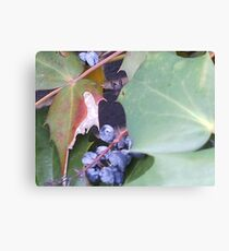 Berries.... Canvas Print