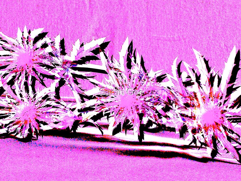 Pink thistles by Sarah Gee