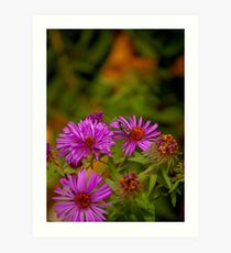 Flying Insect on Purple Flower Art Print