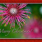 Merry Christmas 1 by samatar