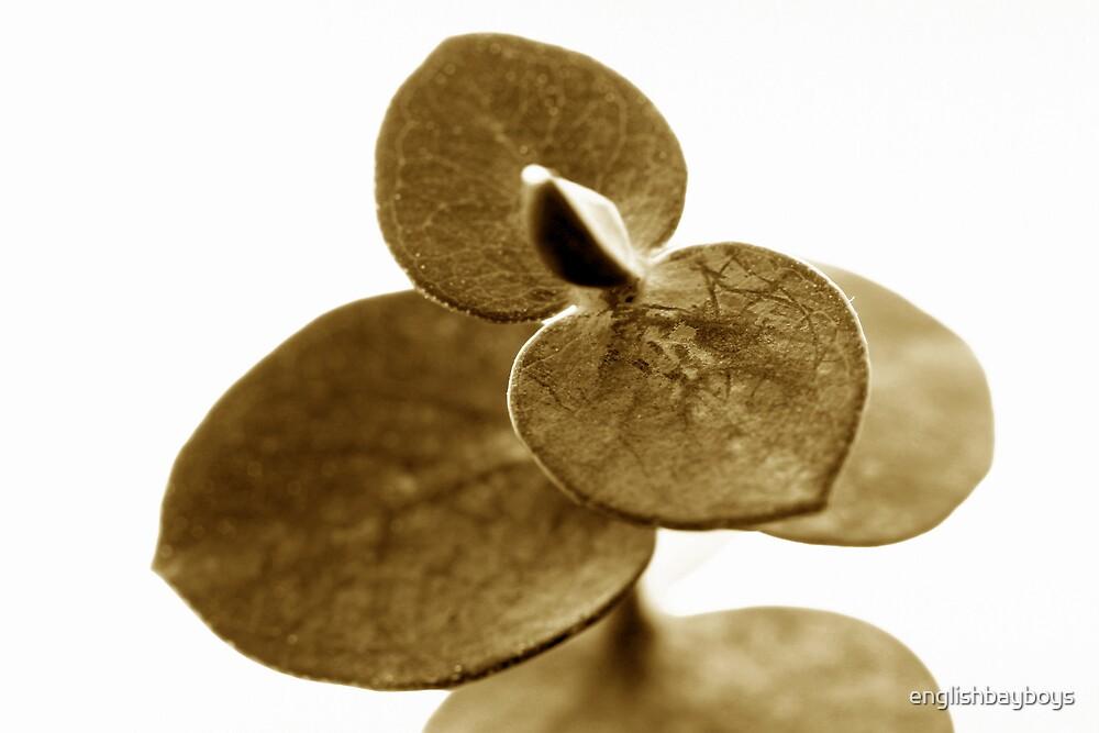 Sepia Leaves 2 by englishbayboys