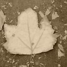 Another Leaf by lunarstorm12