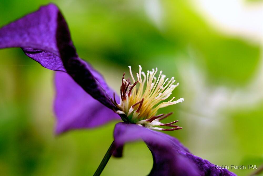 Purple Macro by Robin Fortin IPA