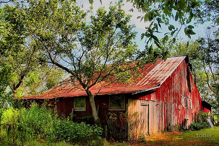 the red barn by toma
