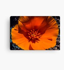 Detail of California Poppy Canvas Print