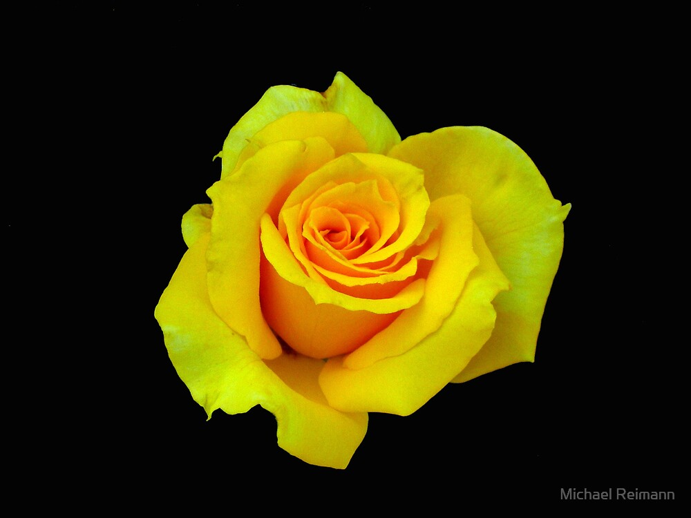 There Is Beauty In Darkness by Michael Reimann