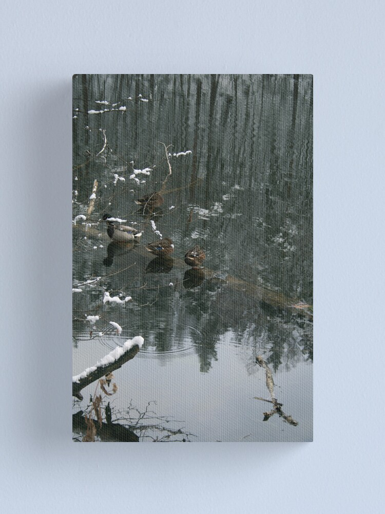 Alternate view of Ducks in the winter reflection Canvas Print