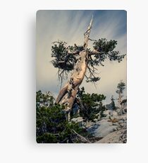 Desolation Wilderness, Eldorado National Forest, CA Canvas Print