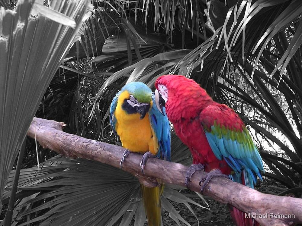 """""""Love"""" Birds by Michael Reimann"""