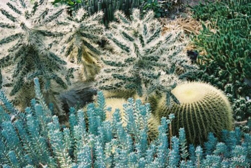 Cactaceae by Jacktupp