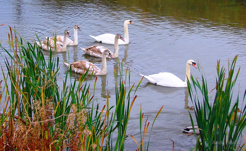 Family outting by Andy Harris