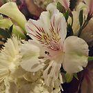 Flower Close-Up, Lower Manhattan, New York City by lenspiro