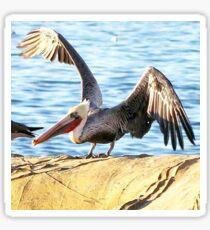 Newport Beach Pelican Sticker