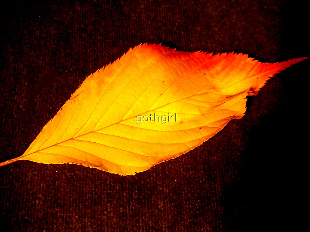 Autumn leaf by gothgirl