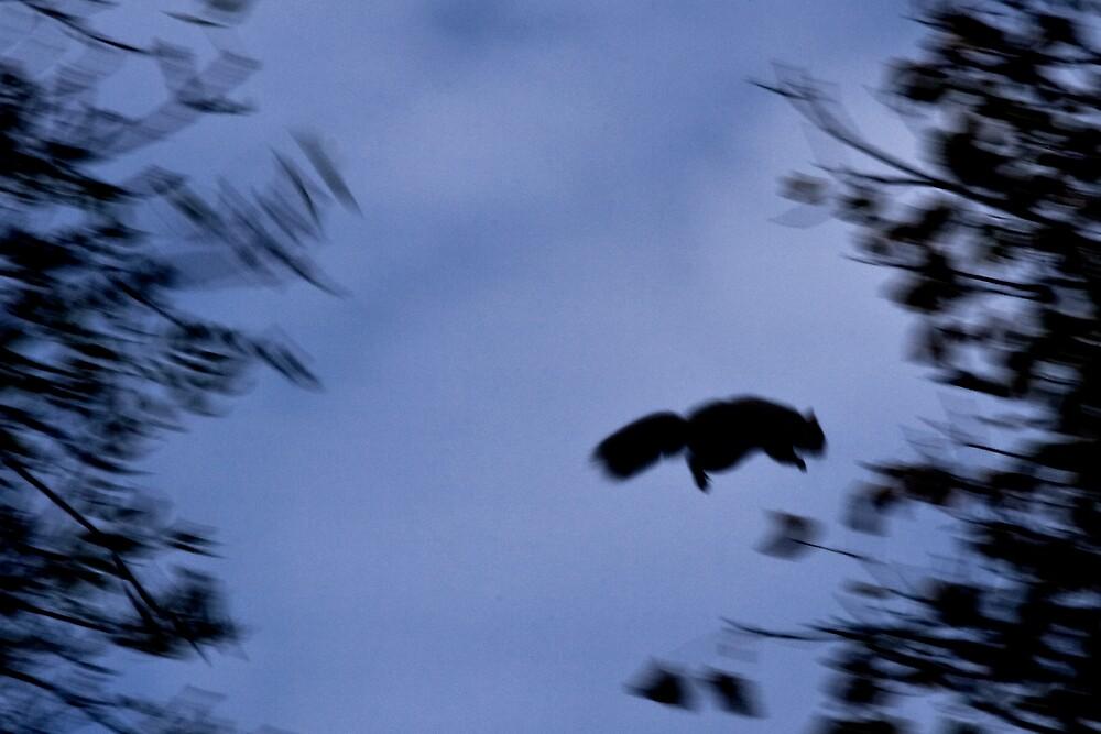 """""""Leap of Faith"""" by Chris Clark"""