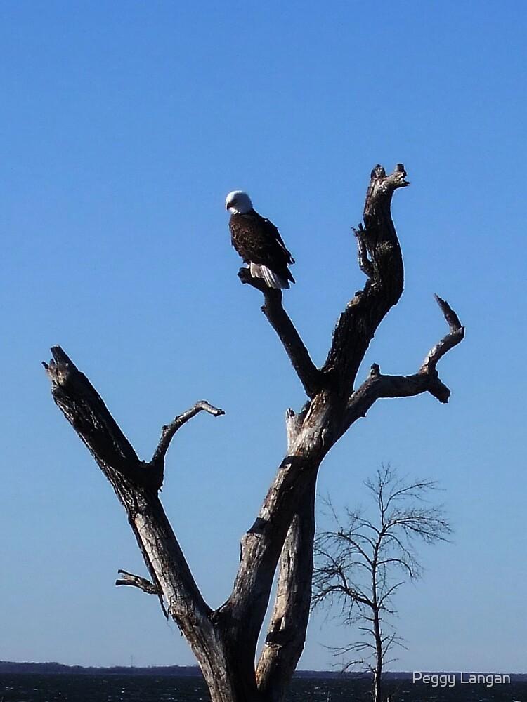 Eagle On Devils Lake by Peggy Langan