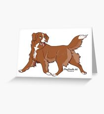 duck toller Greeting Card